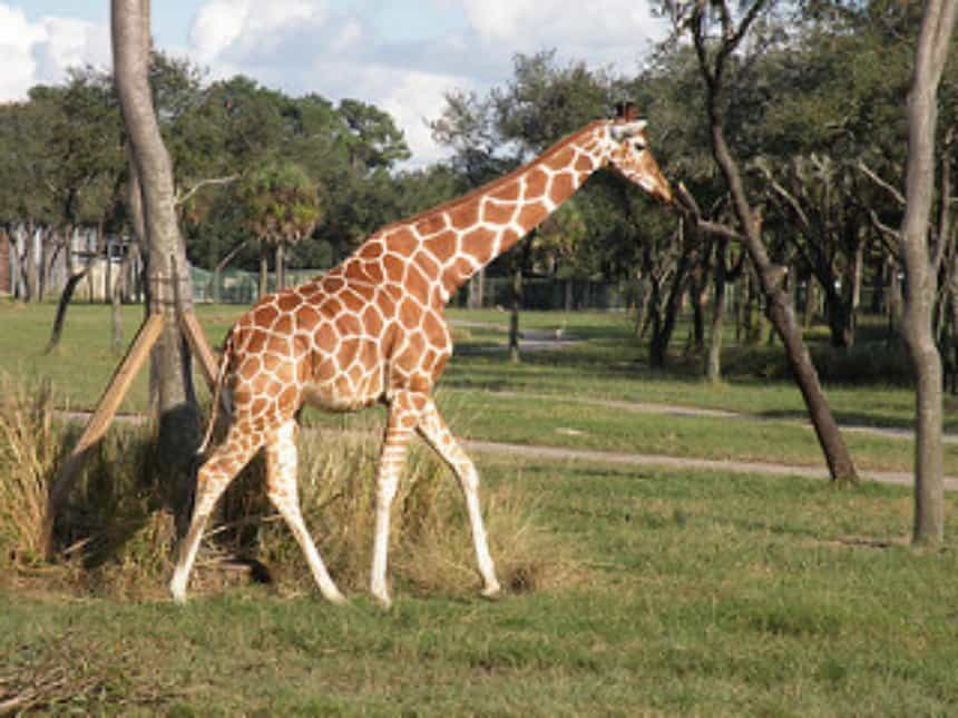 Animal spotting at the Animal Kingdom Lodge