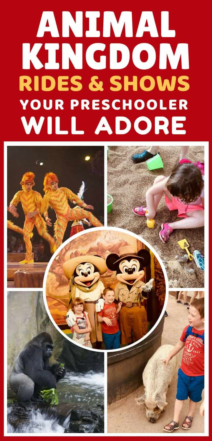 Best Animal Kingdom Rides and Shows for Preschoolers