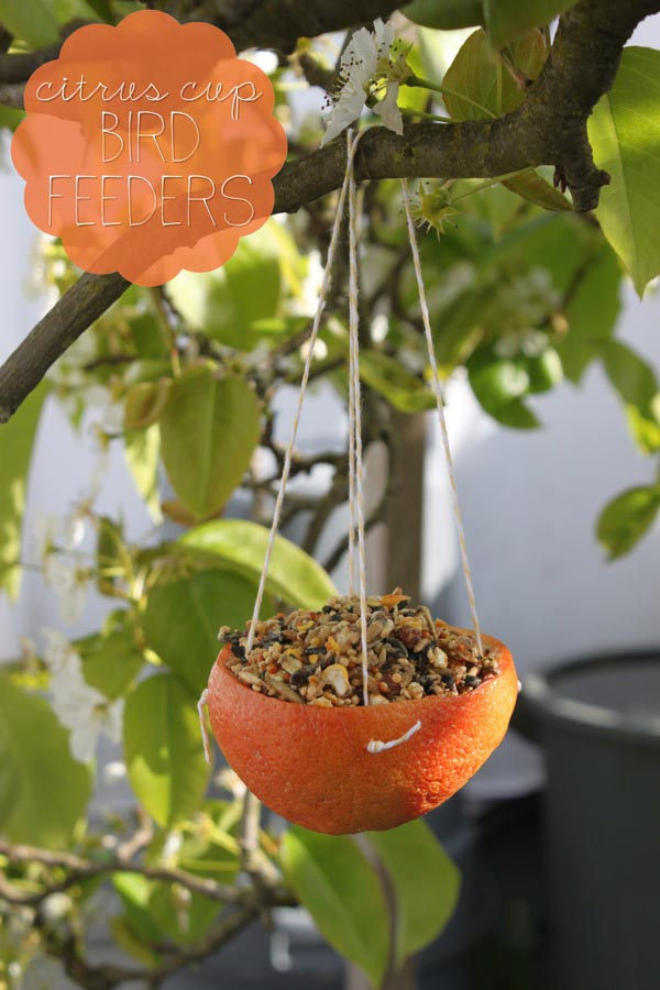 Citrus Cup Bird Feeders