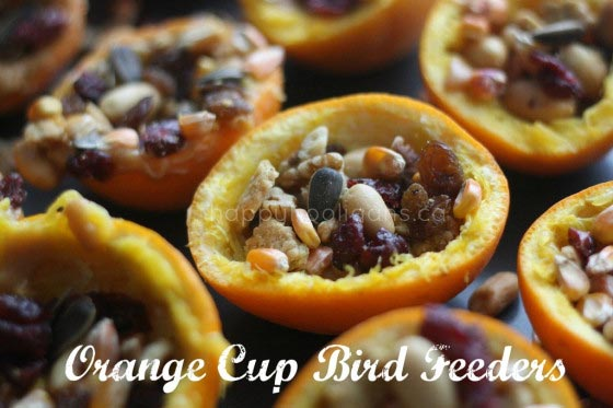 Homemade Orange Cup Bird Feeders