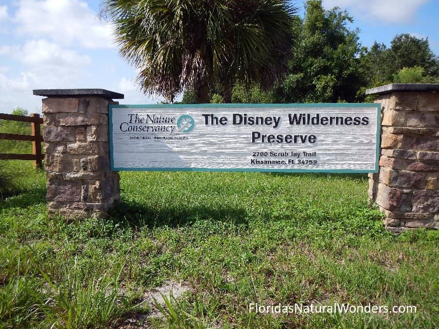 Visit the Disney Wilderness Preserve