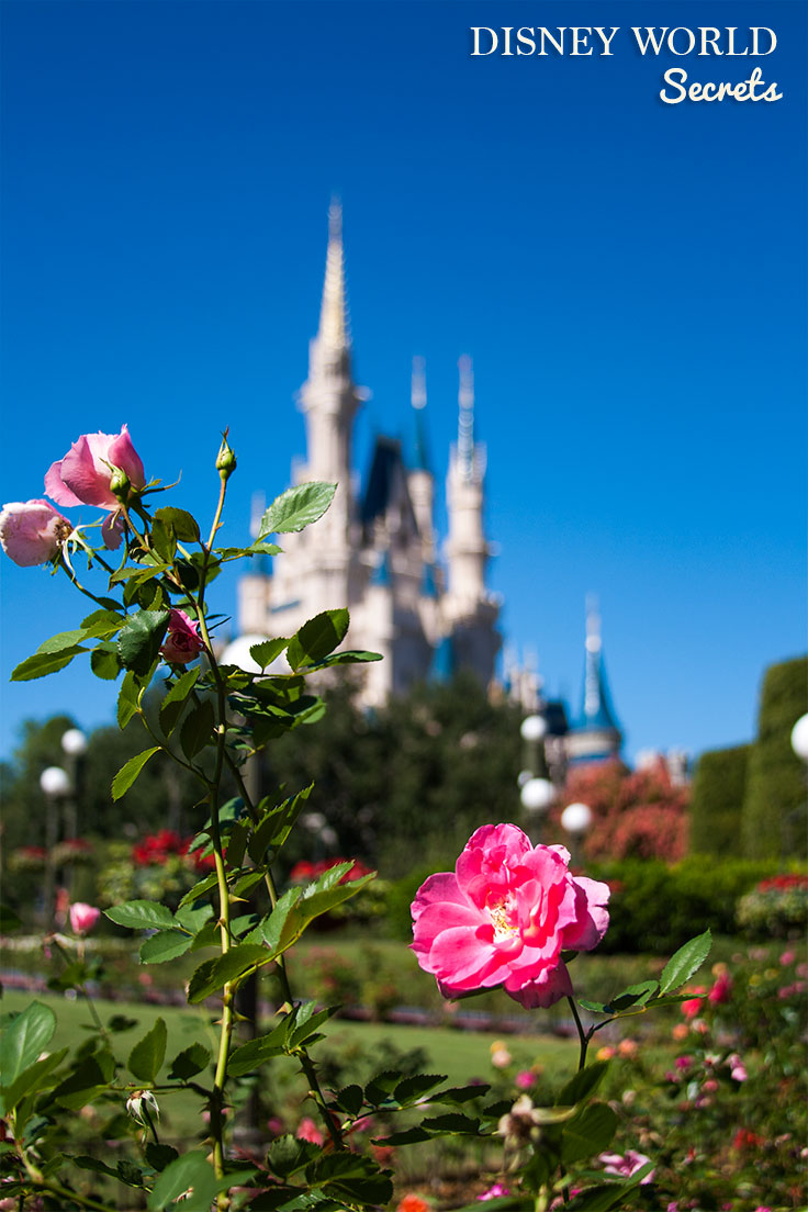 Don't miss these great Disney World secrets to help you get the most out of your vacation