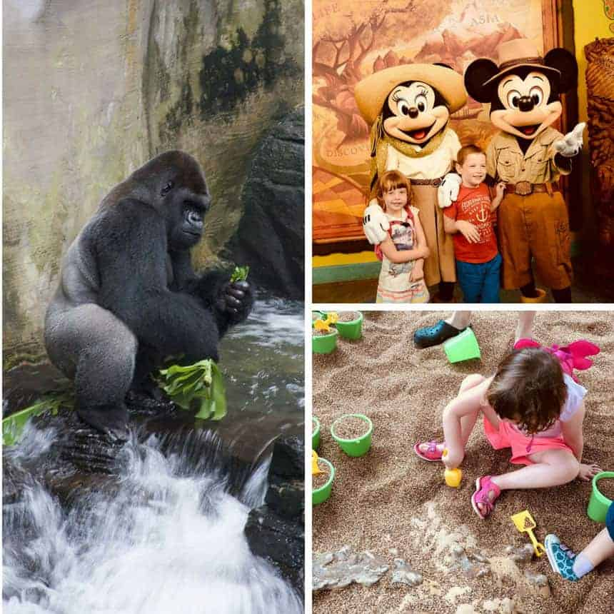 Disneys Animal Kingdom for Preschoolers