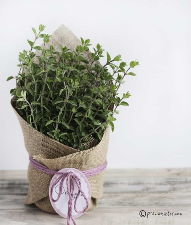 Hostess Herb Plant - there's just something beautiful about the herbs all wrapped up in hessian.