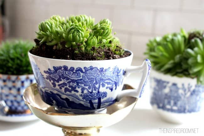 These teacup gardens are just so exquisite they would make a really unique hostess gift idea.