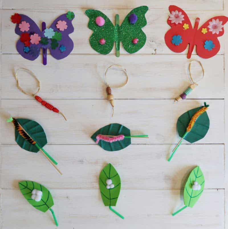 Lifecycle of  Butterfly Craft Tree