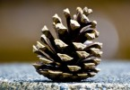Don't throw those pinecones away, we've got 12 amazing ways you can use them to decorate your home for Christmas.