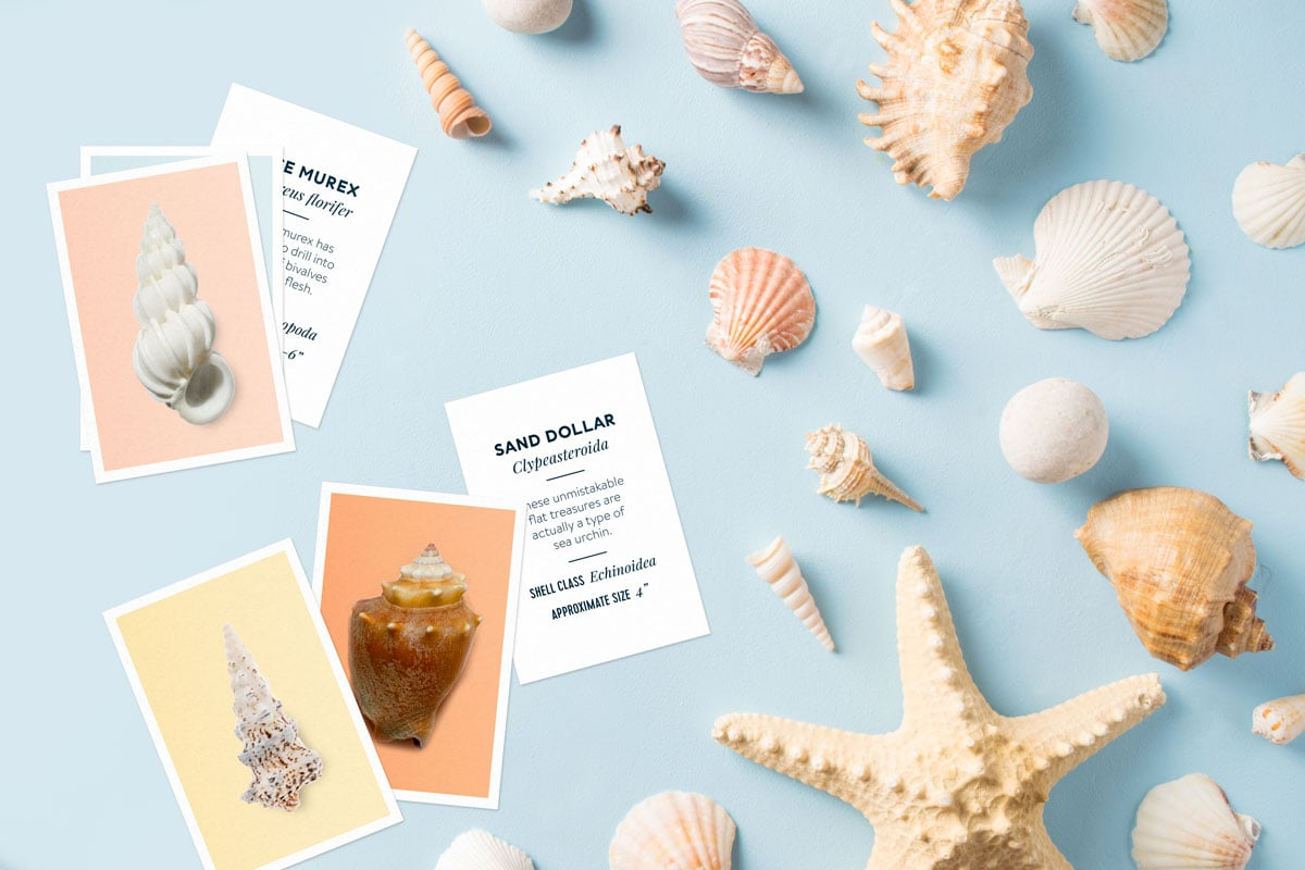 These flashcards are a perfect way to learn about seashells