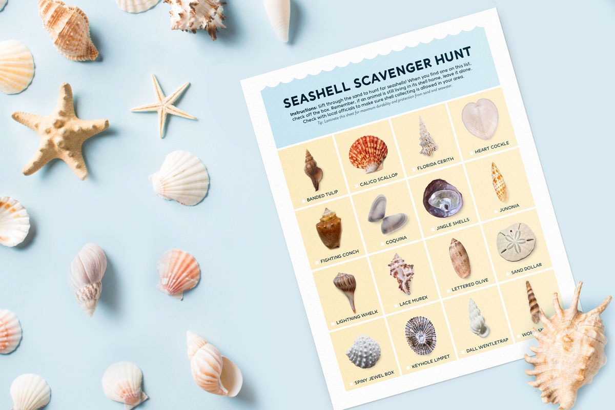 Try this fun seashell scavenger hunt next time you're on the beach