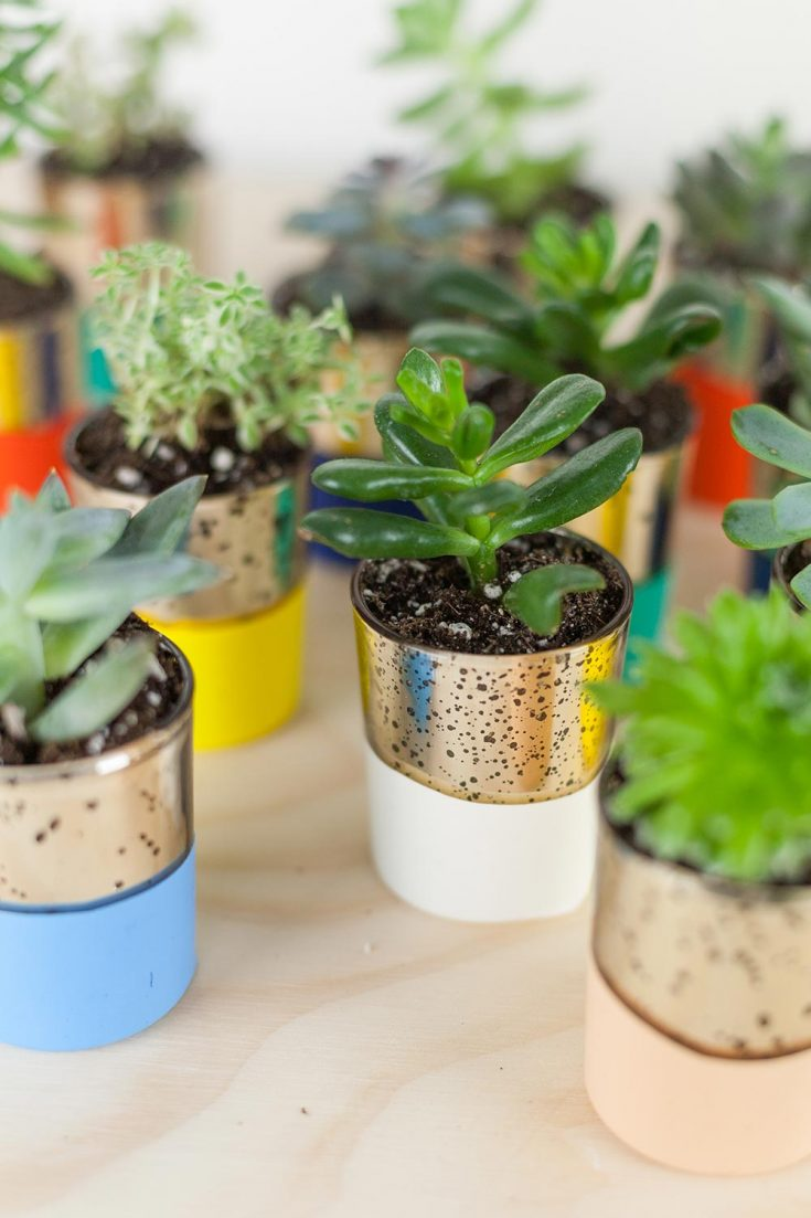 DIY Colorblock Succulent Favors