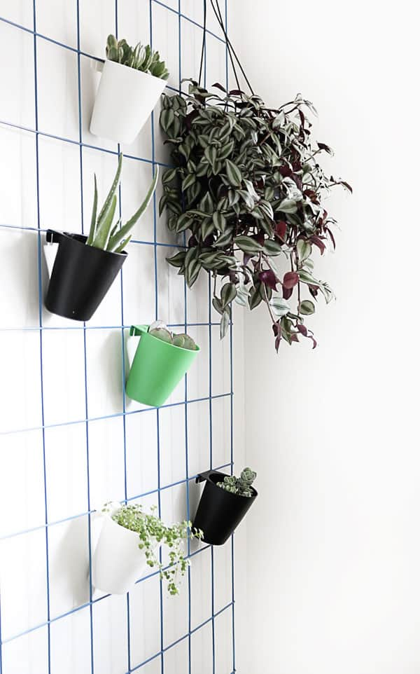 DIY Hanging Plant Wall
