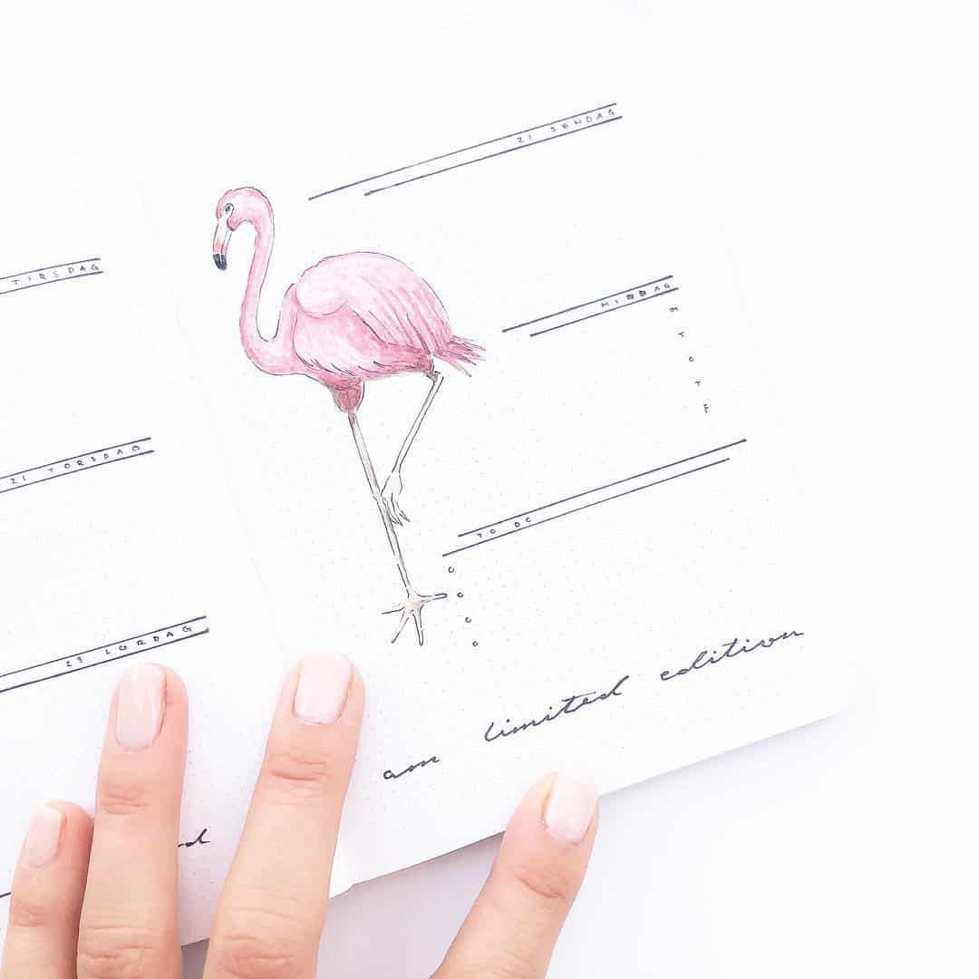 Minimalist Flamingo Spread