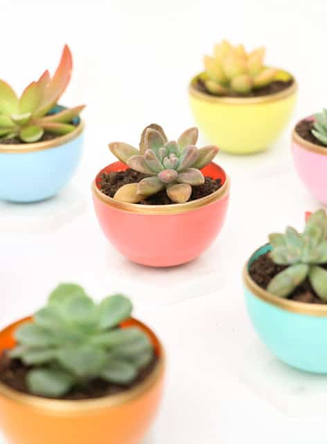 Make mini succulent planters for your desk