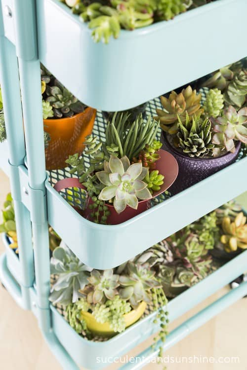 Turn an IKEA RASKOG cart into a succulent planter