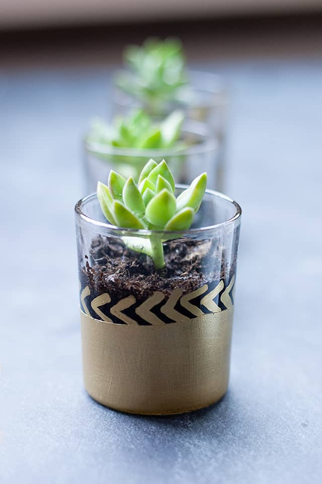 Make mini succulent planters as party favours
