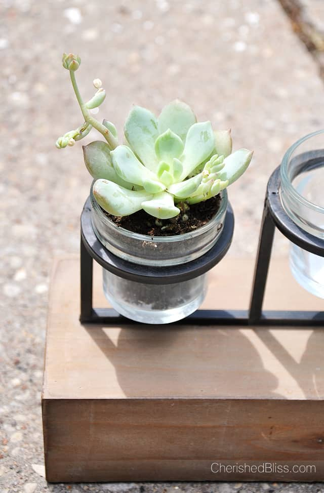 Repurpose a stylish candle holder as a planter